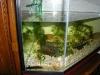 aquariumoverzicht