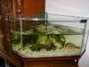 aquariumoverzicht4