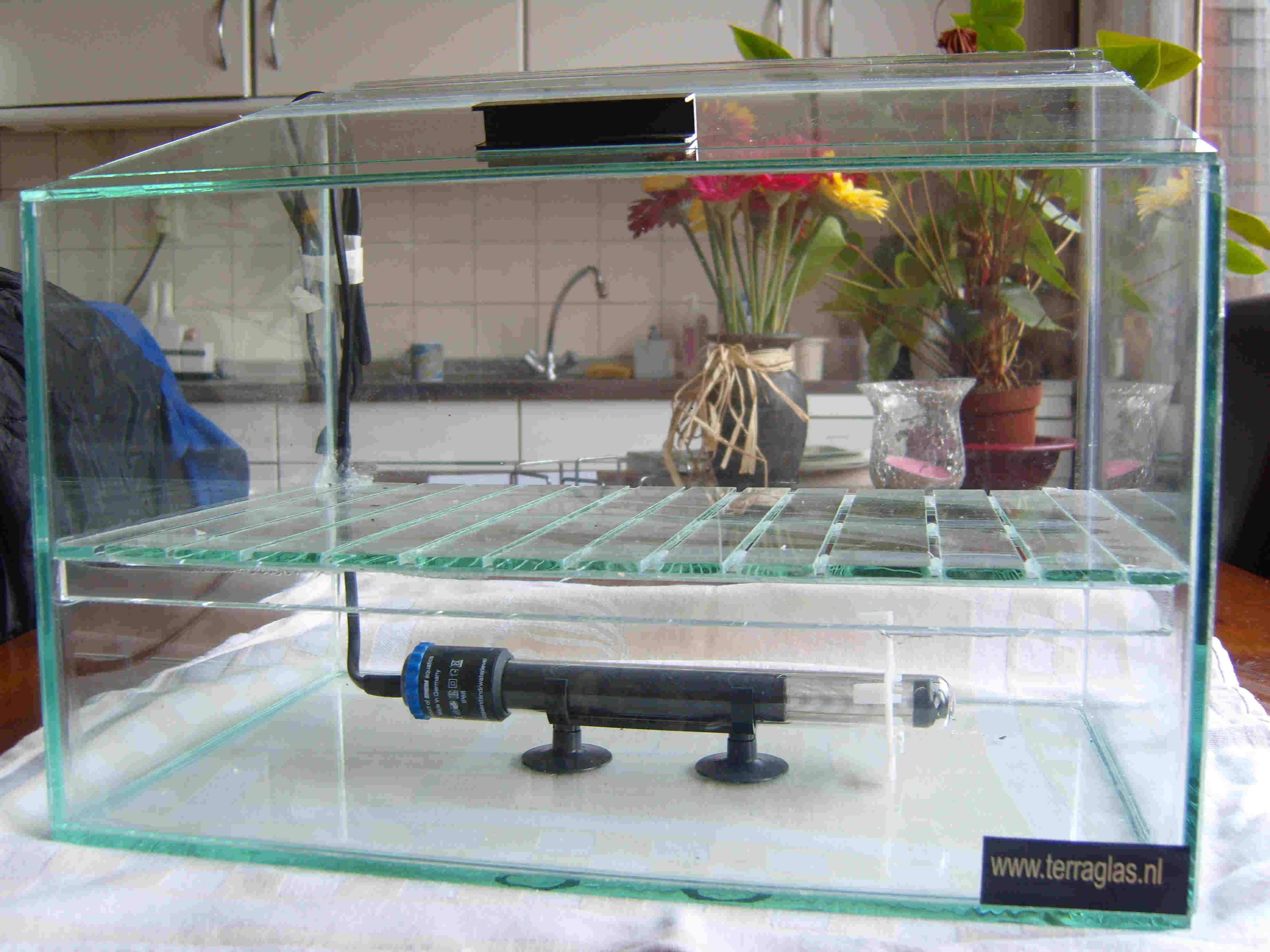 broedstoof glazen rooster003   terraglas nl